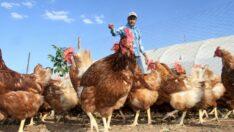 Çin'e ilk kanatlı eti ve ürünleri ihracatı