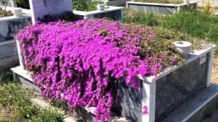 Mezarlık Bitkisi / Cafer Petek